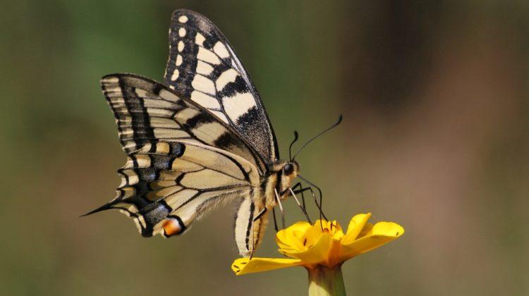 USAF broń chemiczna skrzydła motyli