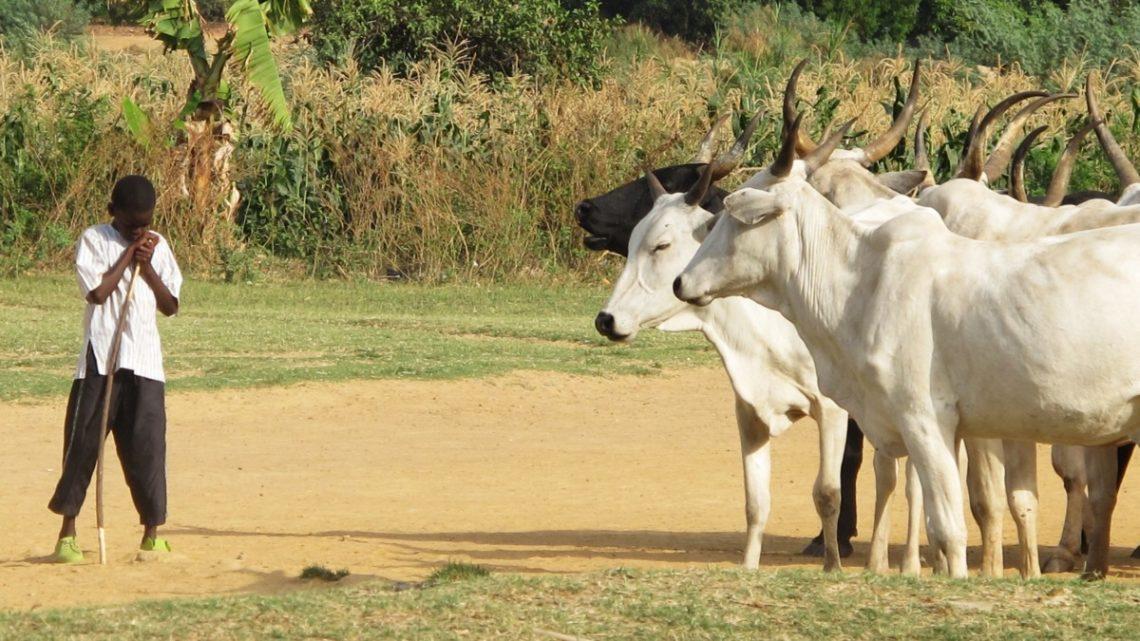 Nigeria Pasterze Rolnicy zapomniana wojna